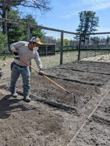 Next, Phurba rakes the soil on top of each raised bed until it is level. Raised beds warm more quickly in springtime and maintain better aeration and drainage.