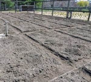 No matter when the soil is prepared, only start planting when the soil is warm enough to be worked. The soil temperature for planting cool weather vegetables is about 40-degrees Fahrenheit. 50-degrees Fahrenheit for onions and leeks, and at least 60-degrees for other warmer and tender crops. This area looks great - thanks, Phurba.