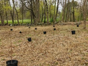 There are about 200 trees in this grouping, so it takes a bit of time to place them properly through this area.