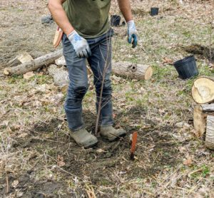 Then he gently steps around the root ball and soil to ensure there aren't any air pockets.