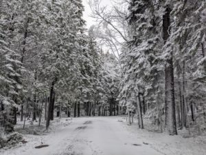This is the long back driveway – the snow has covered many of the tree branches.