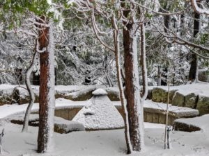 If you follow my blog regularly, you may recognize this spot – it's the Council Circle with the fire pit in the center. The void around it is the circular sitting area. Cheryl captured this photo showing the direction the snow was falling and sticking to the bark of the trees.
