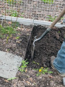 Chhiring starts by digging a trench about five-inches deep on one side of the twine.