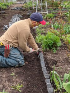 As the bricks are put down, any plants that are growing in the way of the twine are moved and transplanted elsewhere.