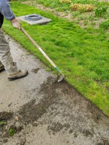 Once a section has been edged, Pete pulls up any existing vegetation between the cut edging line and the lawn.