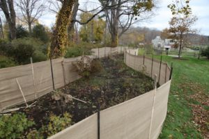 This surround will help to protect the tree peonies from the harsh winter winds.