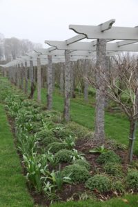 Across the way is the long pergola where an impressive allium border is planted.