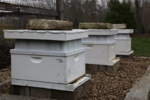 I decided to establish new beehives next to the cutting garden.  The bees have been busy gathering nectar and pollen.