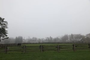 A view of a lower paddock with my house in the distance