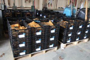 Inside the equipment shed, is the big shipment of spring-flowering bulbs, which will soon be planted - 116,000 to be exact!