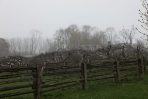 One of three hayfields on the farm