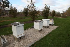 The honeybees are preparing for a long winter ahead.