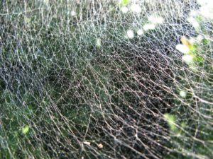 Look how finely woven the web is!