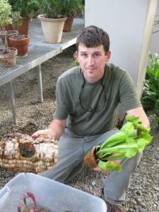 Ground dwelling pitcher plants like their feet wet and ankles dry and grow in bog-like conditions.  The potted plant can float on the water nestled in a piece of cork bark.  The pot is made of natural coconut coir fiber.