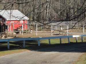 Adjacent to the North Salem Open Land Foundation are the kennels of the hounds of Goldens Bridge Hunt.