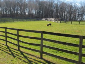 That miniature horse is the companion of the weanling.