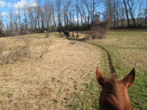 Horses are creatures of habit, as proven by this worn down trail.