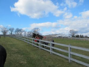 Her horses and one of her barns