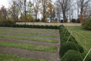 This is my herbaceous peony garden all cut back to the ground with its boxwood surround.