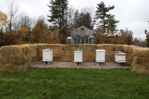 The honeybee hives have their winter wind protection of a wall of baled hay.