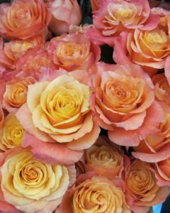Pretty and very fragrant roses