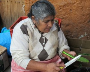 This woman spends her day trimming the needles off nopales.