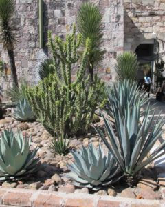 Outside of La Aurora was a wonderful aloe/agave/cactus garden.