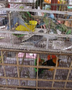 There were even birds for sale in the market.