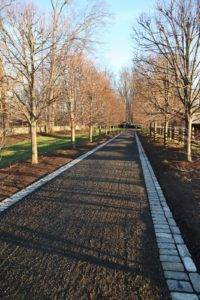 This is the allee of linden, now without leaves.  Beneath the trees is where the bulbs are to be planted.