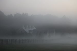 The fog is still draped over the stable.