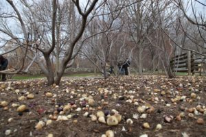 It's simply an astounding number of bulbs and I can hardly wait until spring!