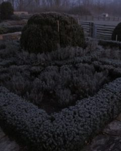 The frost coated every tiny leaf of the teucrium hedging growing in the terrace gardens.