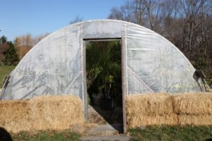 This is the hoop house filled with tropical plants and surrounded with insulating bales of hay.