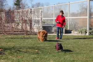 My housekeeper, Laura Acuna, walks the dogs frequently.