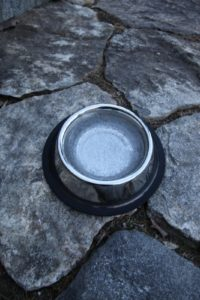 The dogs outdoor water bowl is frozen.