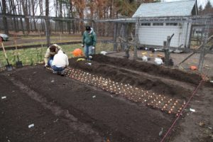1000 tulip bulbs came from Brent & Becky's Bulbs.  http://www.brentandbeckysbulbs.com/