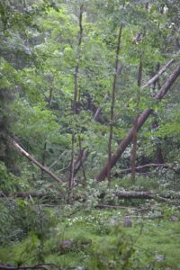 The narrow path of the twister runs right through a very wooded area.