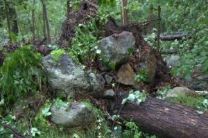 This tree was pulled right out of the ground along with large boulders and the surrounding flora.