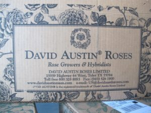 The boxes are decorated with a beautiful rose print which has been specially designed for David Austin Roses.