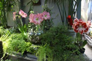 Ferns and amaryllis