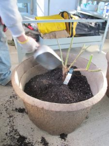 The potting mix was added.