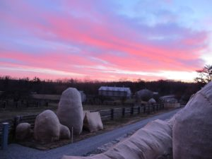 It seemed as though the entire farm was washed in pink.