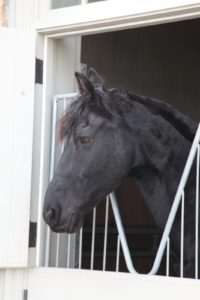 Sasa back in his stall