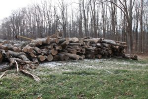 All of the fallen trees are taken to the compost area and stacked.