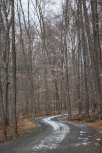 The carriage road winding through the woods