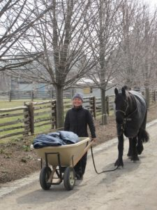 Dolma on her way to the paddock with Rinze