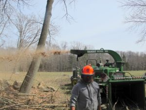 The wood chipper has been used a lot lately - unfortunately, way too much, in my opinion.