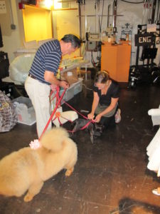 Carlos escorted the dogs into the backstage of The View.  Our stylist, Jocelyn, greeted the party and prepped the dogs for their debut.