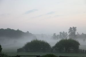 Another early misty morning at the farm.