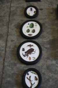 The designers found amazing props like these old beetle prints.
